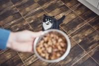 Katze will richtig gefüttert werden.