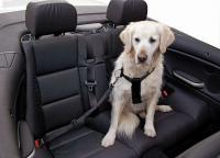 Auto-Hundegeschirr 2in1 70-90cm