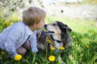 Hund mit Würmern spielt mit Kleinkind auf Wiese
