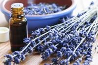 Ätherisches Öl Fläschchen mit Lavendelstrauch