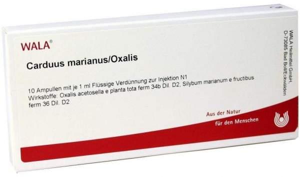 Carduus Marianus Oxalis Ampullen