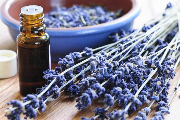 Ätherische Öle im Fläschchen neben Lavendelstrauch