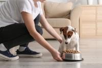 Frauchen gibt ihrem Hund einen Napf Futter mit wichtigen Vitaminen.