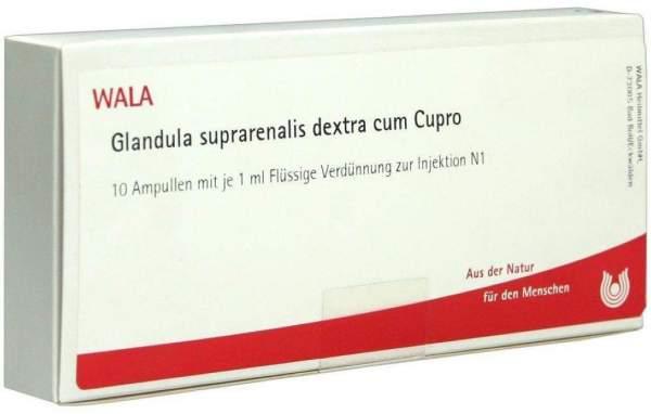 Wala Glandula Suprarenalis Dextra Cum Cupro Coll. 10x1ml Ampullen