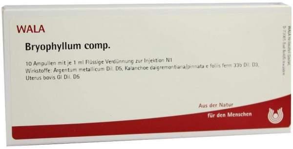 Bryophyllum Comp. Ampullen