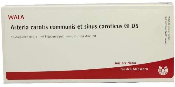 Wala Arteria Carotis Communis Et Sinus Caroticus Gl D5
