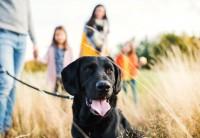 Hund bei Spaziergang mit Familie im freien Feld