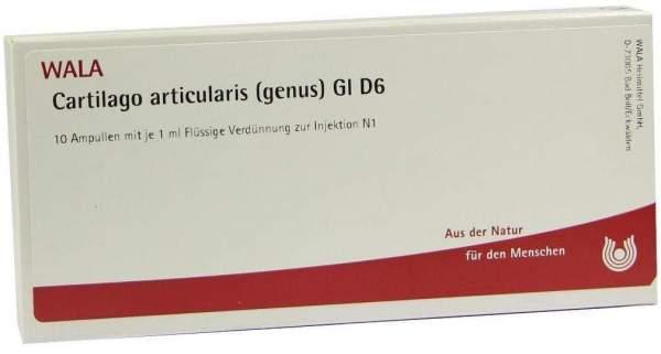 Cartilago Artic. Genus Gl D 6 Ampullen